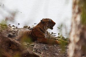 Ranthambore national park experience