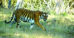 bandipur-national-park-Source-mcresort.in_