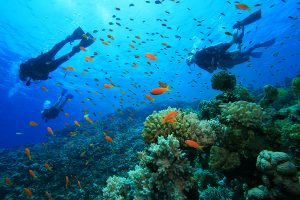 scuba-diving-experience-havelock , Scuba diving in india, havelock island, andaman and nicobar island
