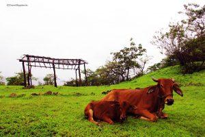 trek to khoj fort, pazhar lake, treks from mumbai , Travel Hippies, monsoon treks near mumbai, kohoj fort