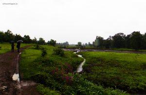 The initial trek route passes through the paddy fields of the villagers,trek to khoj fort, pazhar lake, treks from mumbai , Travel Hippies