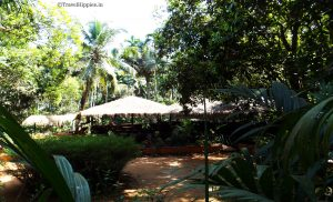 Goa Spice Plantation tour